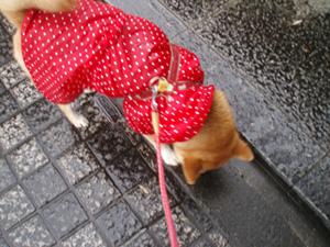 あーあ、雨ってやだす。