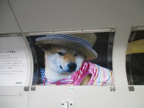 帽子が似合う♪